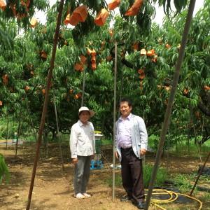 桃農家の方と
